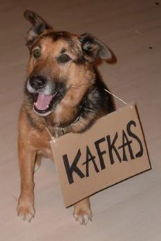Kafkas + Instead Off